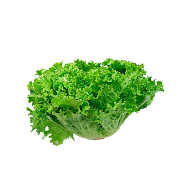 Alface-crespa-organico-01-unidade-Vida-Natural