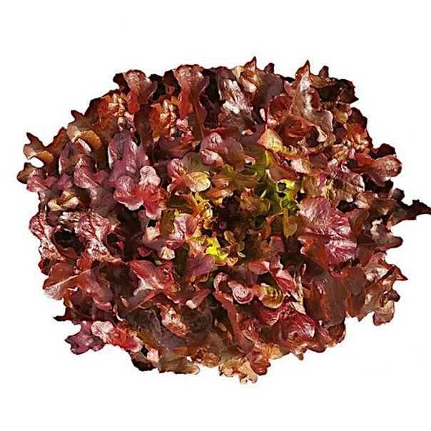 Alface-crespa-roxa-hidroponica-01-unidade-Suguimoto-