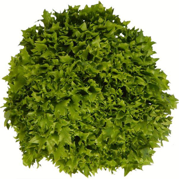 Alface-mini-frizzy-verde-organico-Solo-Vivo-150g